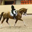 """5 av """"våra"""" hästar utvalda i SvRFs landslagsgrupper"""