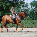 Brilliant sunshine and dressage training – can it get any better?